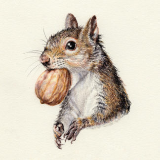 """""""Gray Squirrel"""" – Daily Drawing #314"""