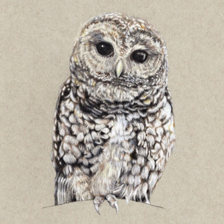 """""""Mexican Spotted Owl"""""""